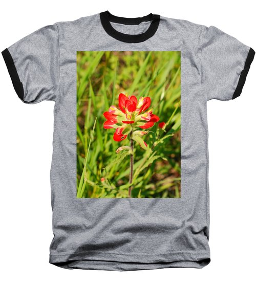 Indian Paintbrush Close Up Baseball T-Shirt