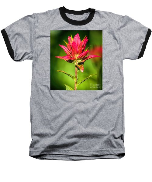 Baseball T-Shirt featuring the photograph Indian Paintbrush by Richard Lynch