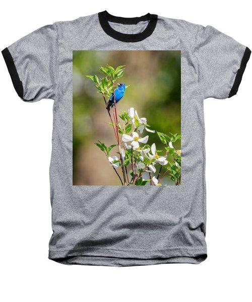 Indigo Bunting In Flowering Dogwood Baseball T-Shirt by Bill Wakeley