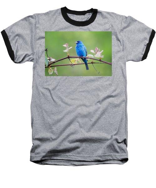 Indigo Bunting Perched Baseball T-Shirt by Bill Wakeley