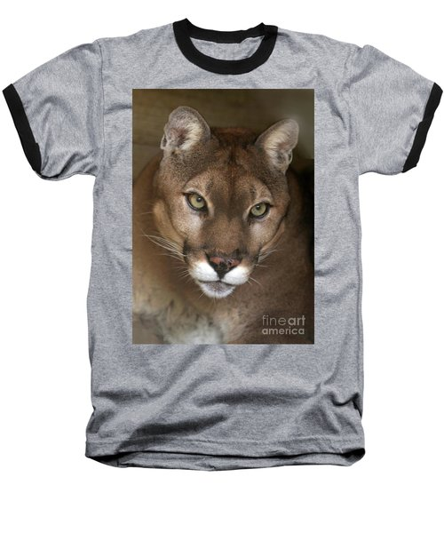 Intense Cougar Baseball T-Shirt