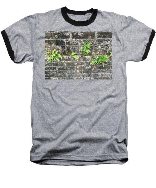Intrepid Ferns Baseball T-Shirt by Kim Nelson