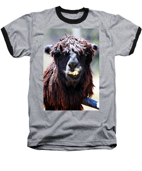 Baseball T-Shirt featuring the photograph Is Your Mama A Llama? by Anthony Jones