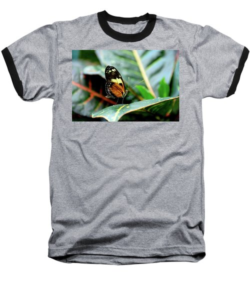 Ismenius Tiger Butterfly-2 Baseball T-Shirt