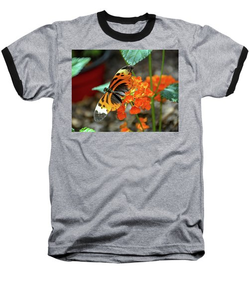 Ismenius Tiger Butterfly Baseball T-Shirt