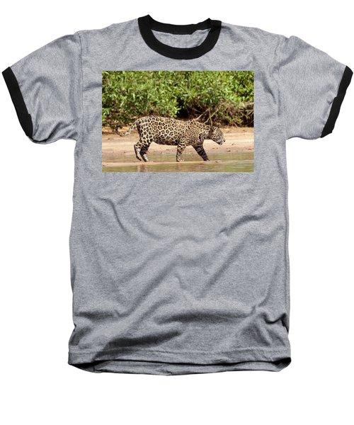 Jaguar Walking On A River Bank Baseball T-Shirt by Aivar Mikko