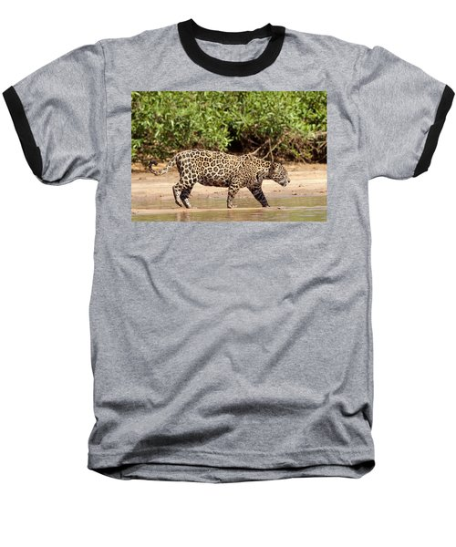 Jaguar Walking On A River Bank Baseball T-Shirt