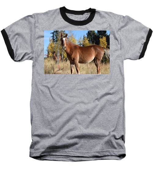 Horse Cr 511 Divide Co Baseball T-Shirt