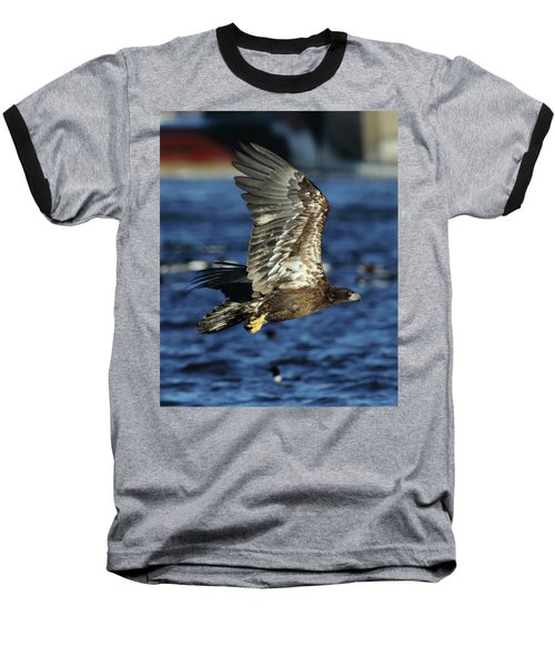 Baseball T-Shirt featuring the photograph Juvenile Bald Eagle Over Water by Coby Cooper
