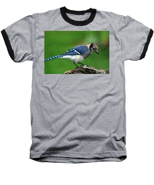 Juvenile Blue Jay  Baseball T-Shirt