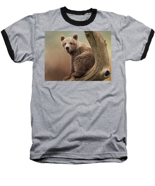 Juvenile Brown Bear - 365-5 Baseball T-Shirt by Inge Riis McDonald