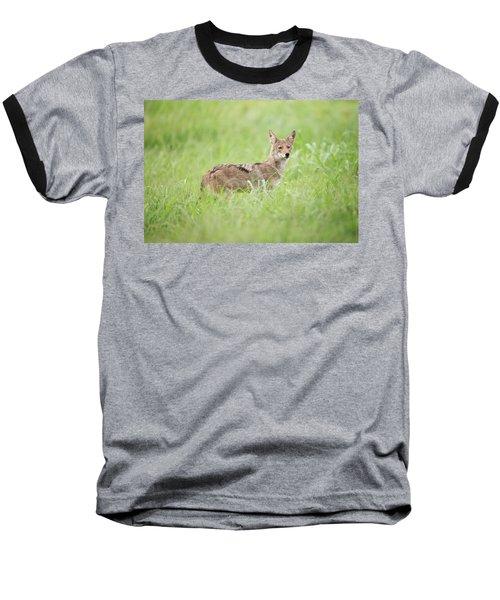 Juvenile Coyote Baseball T-Shirt