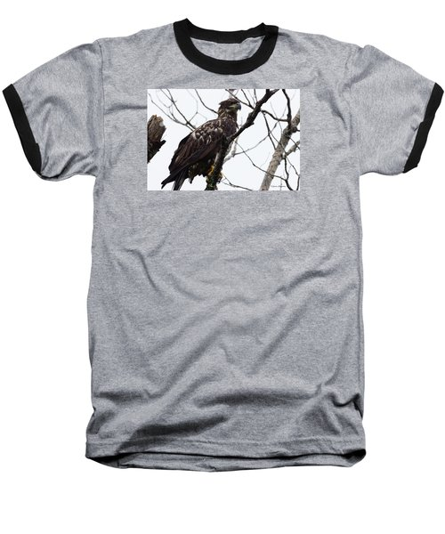 Baseball T-Shirt featuring the photograph Juvenile Eagle 2 by Steven Clipperton
