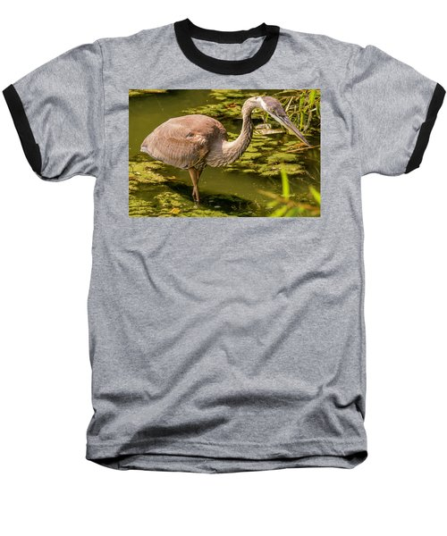 Juvenile Great Blue Heron Baseball T-Shirt