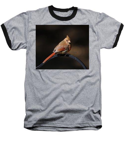 Juvenile Male Cardinal Baseball T-Shirt by Diane Giurco