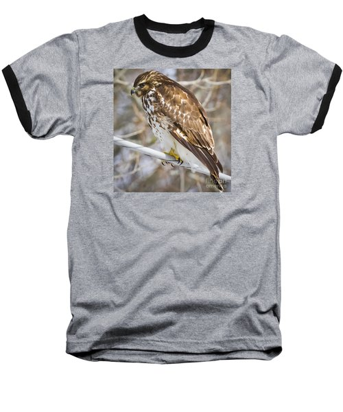 Baseball T-Shirt featuring the photograph Juvenile Red-shouldered Hawk  by Ricky L Jones