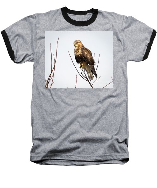 Juvenile Rough-legged Hawk  Baseball T-Shirt by Ricky L Jones