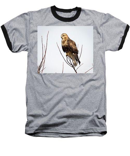 Juvenile Rough-legged Hawk  Baseball T-Shirt