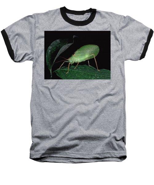 Katydid At Night Baseball T-Shirt