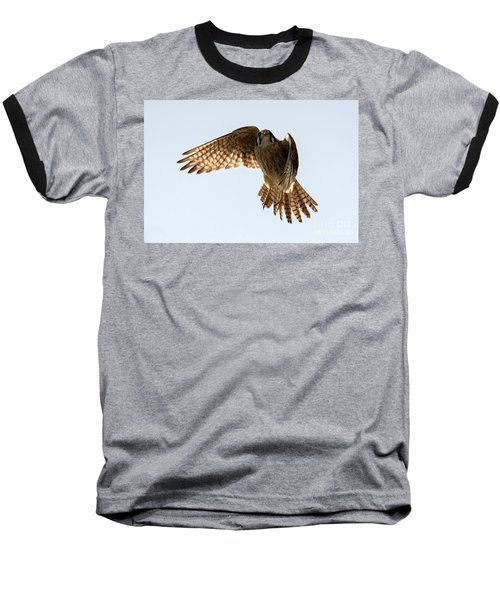 Baseball T-Shirt featuring the photograph Kestrel Hover by Mike Dawson