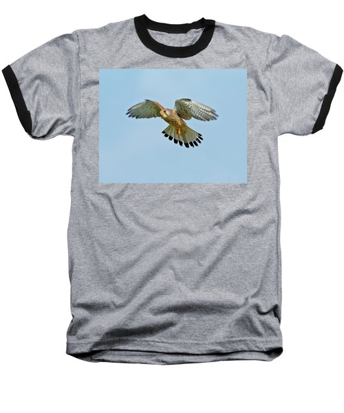 Baseball T-Shirt featuring the photograph Kestrel In The Wind . by Paul Scoullar