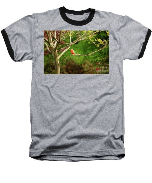 King Parrot Baseball T-Shirt