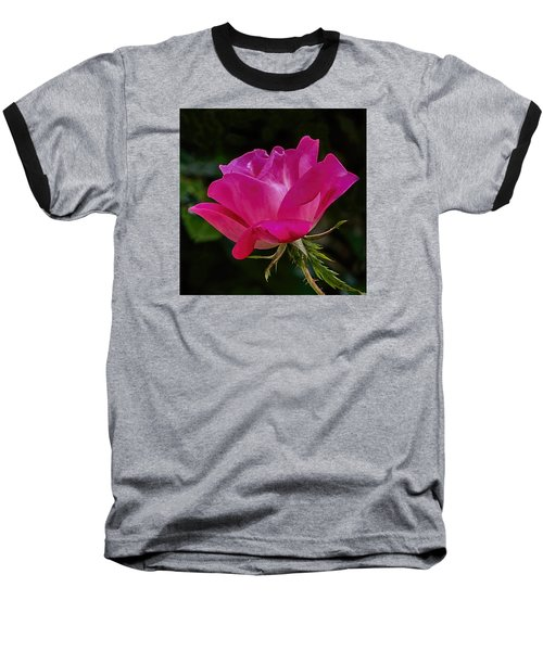 Knock-out Rose Baseball T-Shirt by Susi Stroud