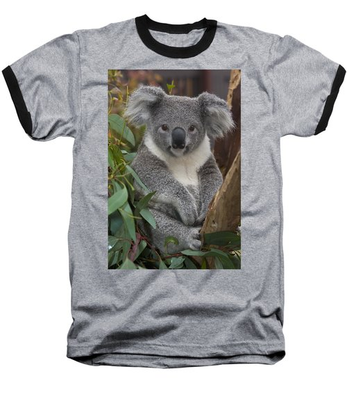 Koala Phascolarctos Cinereus Baseball T-Shirt by Zssd