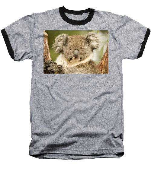 Koala Snack Baseball T-Shirt by Mike  Dawson