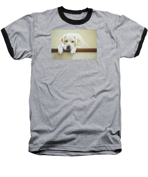 Labrador Retriever On The Stairs Baseball T-Shirt by Diane Diederich