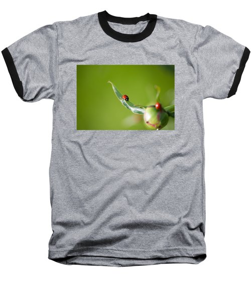 Ladybug On Flower Baseball T-Shirt by Konstantin Sevostyanov