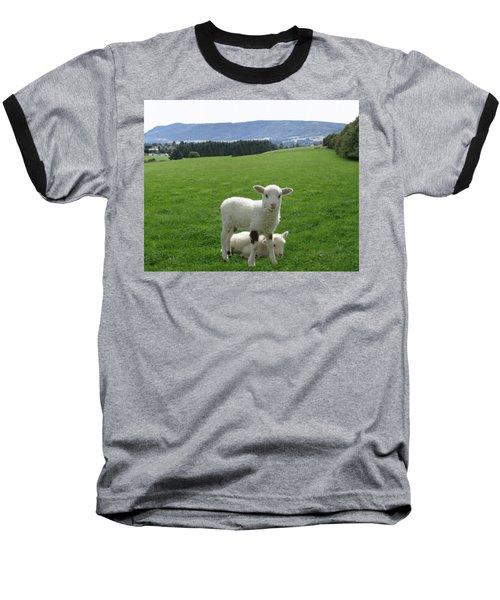 Lambs In Pasture Baseball T-Shirt by Dominic Yannarella