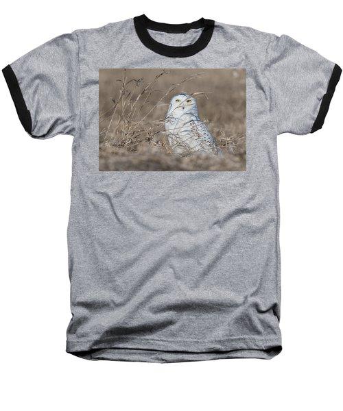 Last Year Of The Snowy Owls... Baseball T-Shirt