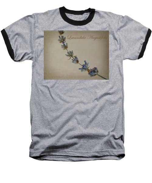 Lavandula Angustifolia Baseball T-Shirt by Julia Wilcox