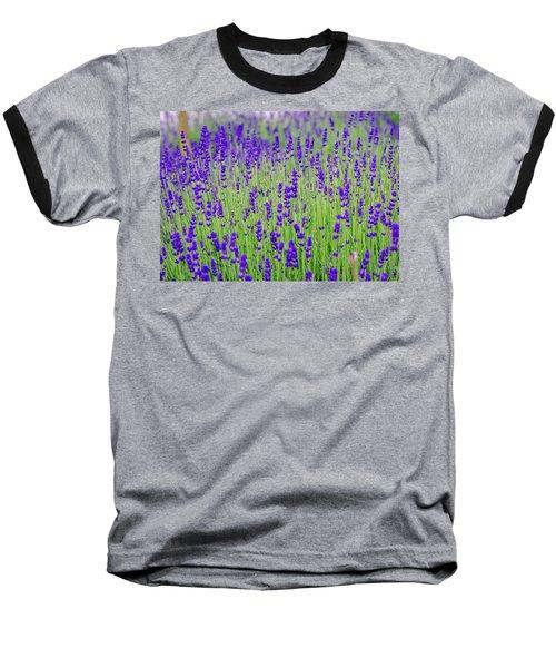 Lavender Baseball T-Shirt