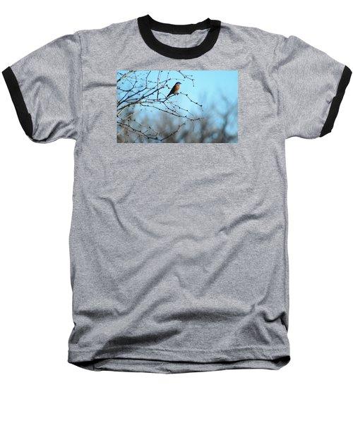 Lazuli Bunting Looks Out Baseball T-Shirt