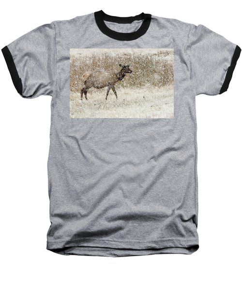 Lead Cow Baseball T-Shirt