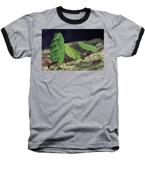 Leafcutter Ant Atta Cephalotes Workers Baseball T-Shirt by Mark Moffett