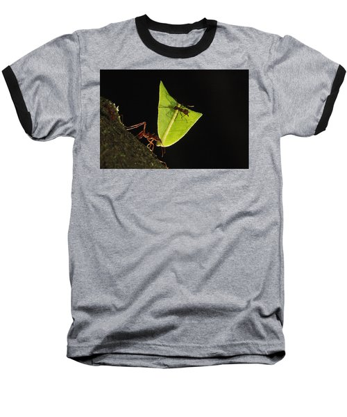 Leafcutter Ant Atta Sp Carrying Leaf Baseball T-Shirt by Cyril Ruoso