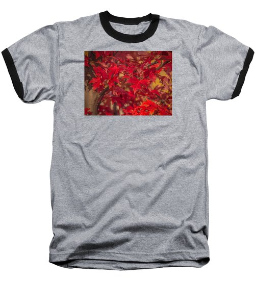 Leaves Of Red Baseball T-Shirt by Cathy Donohoue