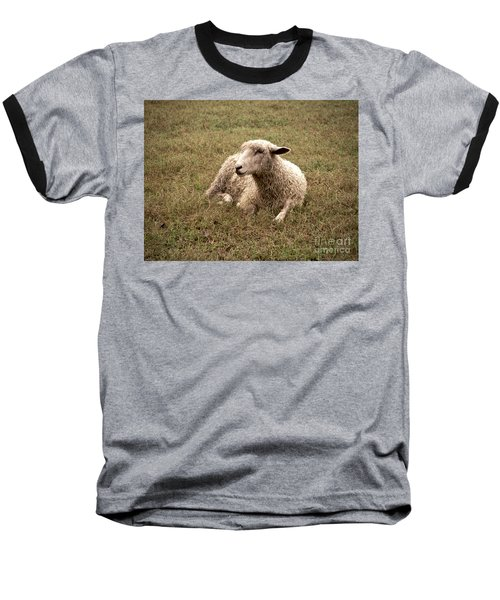 Leicester Sheep In The Dewy Grass Baseball T-Shirt