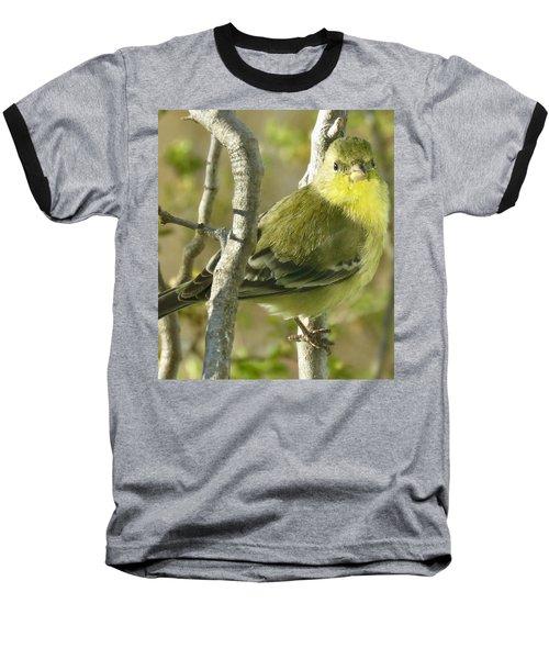 Lesser Goldfinch 1 Baseball T-Shirt