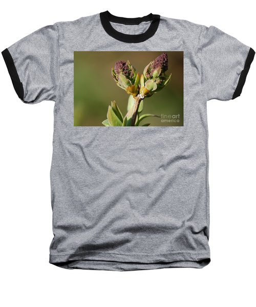 Lilac Bud Baseball T-Shirt