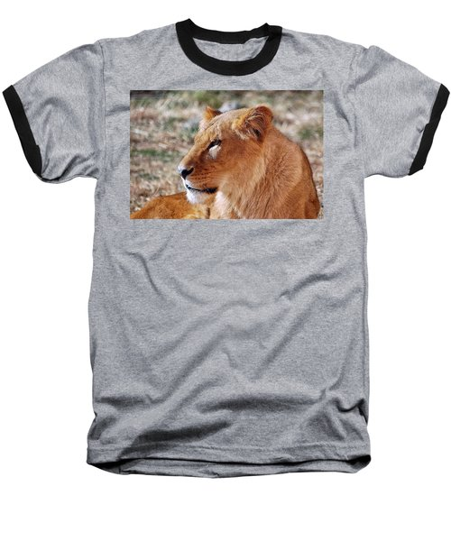 Lion Around Baseball T-Shirt