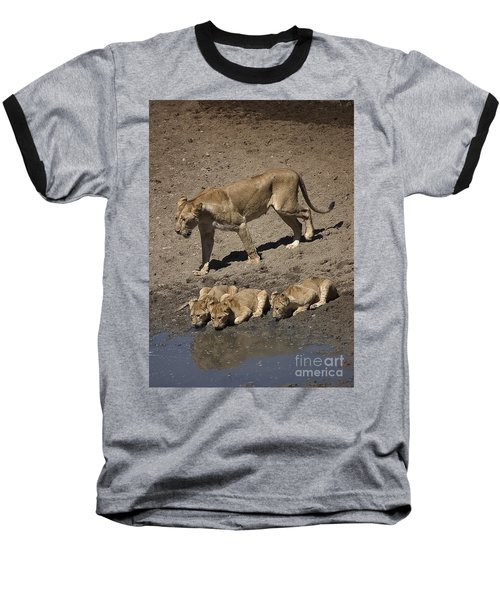 Lion Cubs And Mom Get A Drink Baseball T-Shirt by Darcy Michaelchuk