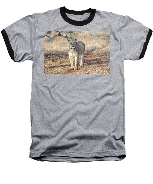 Lioness In Kruger Baseball T-Shirt by Pravine Chester