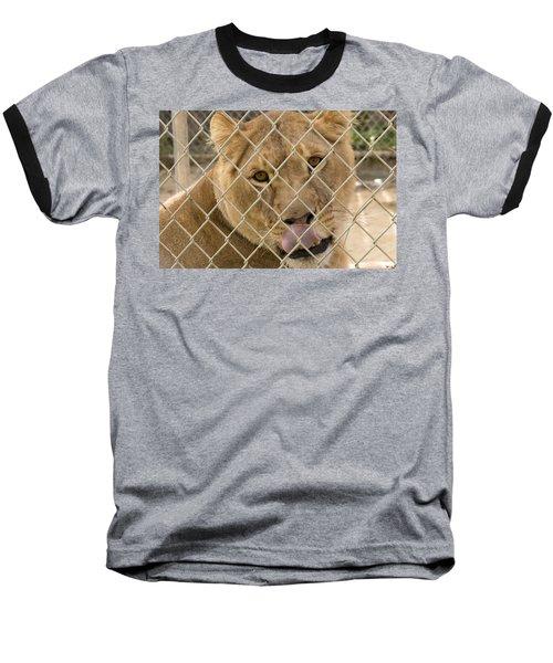 Lioness Licks Baseball T-Shirt