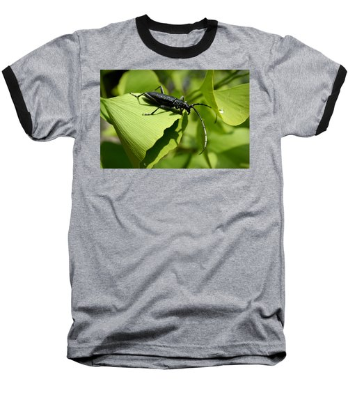 Little Beetle Baseball T-Shirt
