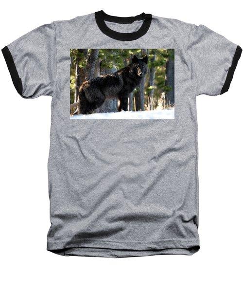 Little Blackie Baseball T-Shirt