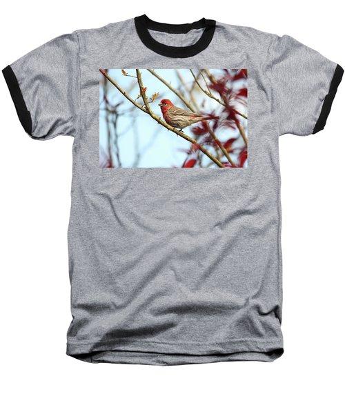 Little Finch Baseball T-Shirt by Trina Ansel